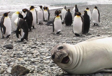 """盘点爱""""抢镜头""""动物 小海豹水下咧嘴笑"""