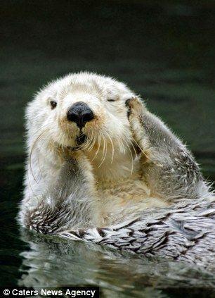 动物园水獭躺水中撒欢 双爪捂眼露超萌表情