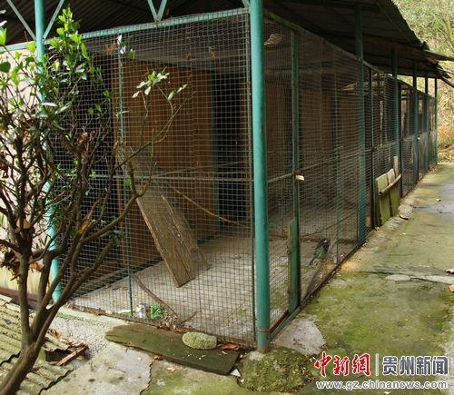 图为贵州省雷公山自然保护区野生动物救护中心工作