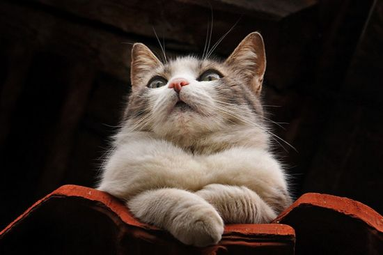 喜欢猫的朋友一定很熟悉上海的丁三郎和台湾的王小明。这里为大家介绍塞尔维亚摄影师Zoran Milutinovic,他专门拍摄自然环境里的猫,捕捉他们有趣又呆萌的表情和动作。图片来源:环球网