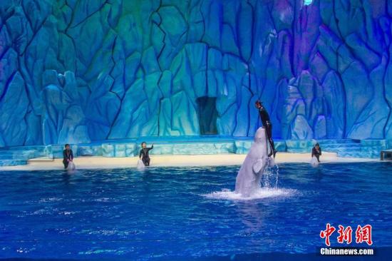 一场名为《极地月光下》的大型情景主题表演秀在珠海长隆海洋王国