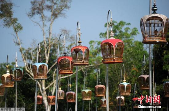 当地时间2014年3月23日,泰国那拉提瓦,高高的栏杆上挂满鸟笼,一场激烈的鸟儿歌唱比赛正在进行。据悉,当天数百名来自泰国、马来西亚以及新加坡的爱鸟人士带着自己的宠物赶来参赛。