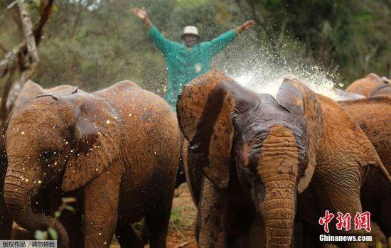 在非洲,当地村民和大象的冲突几乎每天都在发生