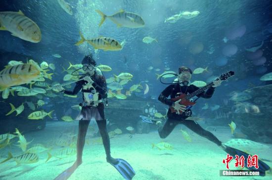 """9月1日,几名摇滚乐手在""""海底摇滚音乐会""""上演奏。当天,为迎接即将来临的中国传统节日中秋佳节,天津海昌极地海洋世界组建的""""海洋乐队""""的乐手们在海底隧道,配以现场外一只真实乐队的演奏,为游客呈现独特的""""海底音乐会""""。中新社发 佟郁 摄"""