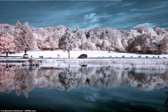 据英国《每日邮报》近日报道,45岁的英国摄影爱好者凯瑟琳·帕金顿借助于采用720红外滤镜的数码相机拍摄了大量精彩的红外摄影作品,展示充满奇幻色彩的美妙景象。过去20年时间里,帕金顿一直从事光学方面的工作,摄影则是她的最大爱好。(网页截图)