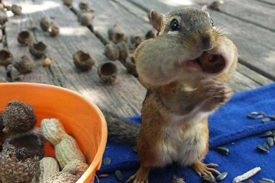 贮存食物过冬的动物图片