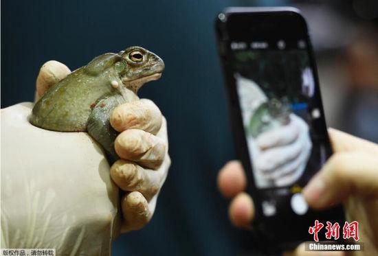 当地时间2014年12月29日,德国汉堡,哈根贝克动物园一年一度的盘点到来,工作人员为动物们进行体检。