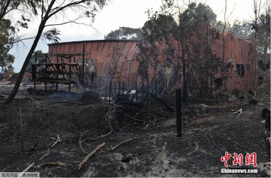 当地时间1月4日,澳大利亚因为高温天气引发林火,数以千计的南澳大利亚州居民被迫逃离家园。其中南澳大利亚受灾情况最为严重,至少六栋房屋被大火烧毁,一些车辆也受到波及。报道称,在强风助威下,灭火工作难上加难。地方官员预计还要好几天才能控制这场林火。