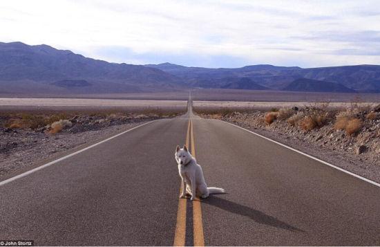 图为Wolfgang蹲在死亡谷国家公园内的马路中央。(网页截图)