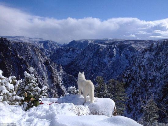 图为2012年,他们在甘尼逊黑峡谷国家公园,Wolfgang矗立在雪峰上,遥望山谷。(网页截图)