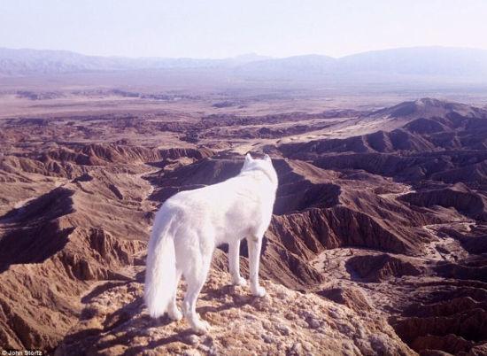 图为Anza-Borrego沙漠,Wolfgang遥望美景。(网页截图)
