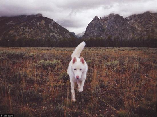 图为怀俄明州的大蒂顿国家公园,Wolfgang正在探路。(网页截图)