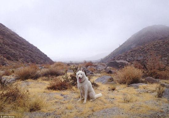 图为Anza-Borrego沙漠的一个浓雾天气,Wolfgang迫不及待的准备出发探险。(网页截图)