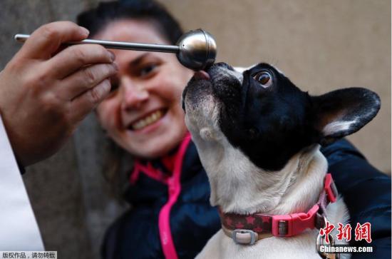 2015年1月20日报道,日前,在西班牙马德里的圣安东尼教堂中,数百名主人带着他们的宠物,前来接受牧师祈福。在西班牙,圣安东尼是动物的守护神,西班牙的许多地方每年都为其举行庆祝仪式。