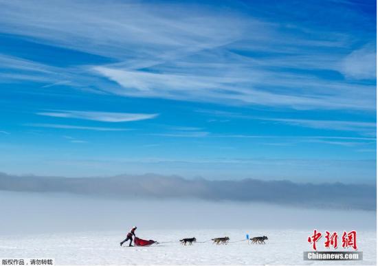 """当地时间2月14日,德国中部的图林根森林,""""跨图林根""""雪橇犬竞赛正在进行。作为最大规模的雪橇犬赛事,""""跨图林根""""雪橇犬竞赛共有500只纯正血统的雪橇犬参与,它们将跨越7个赛段,完成280公里的长途跋涉。"""