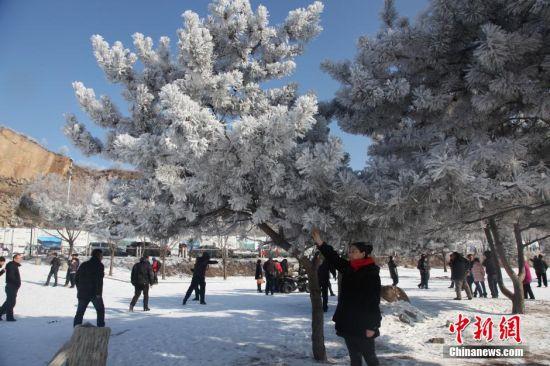 2月19日大年初一,吉林省吉林市松花江畔迎来雾凇美景,吸引大批市民一大早就走出家门,来到江边赏景拍照。中新社发 苍雁 摄