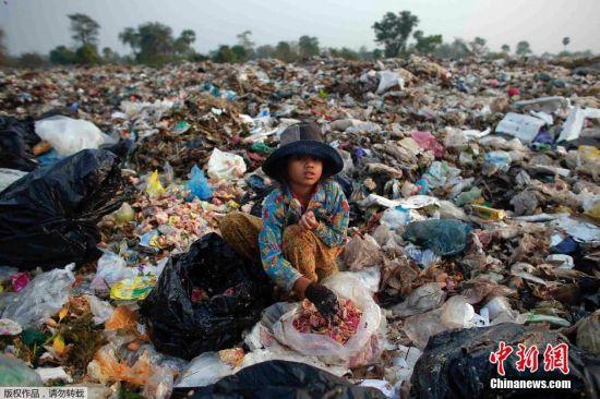 图为11岁的女孩Soburn正在垃圾堆中捡拾猪食。