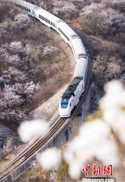2015年04月05日,北京,清明时节,春暖花开,山坡上的杏花灿烂的绽放,迎接开往春天的列车。潘之望 摄 图片来源:CFP视觉中国