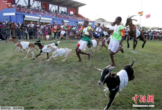 图为山羊赛跑活动现场。