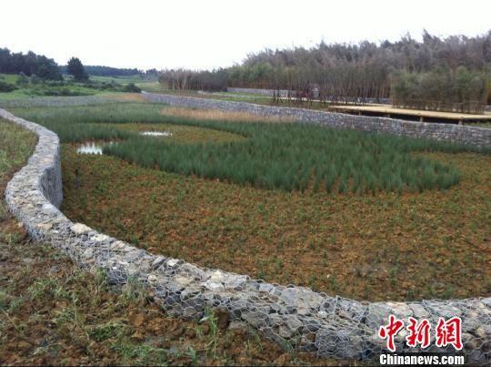 中国贵安生态文明创新园分层净化雨水收集区。 潘存婕 摄