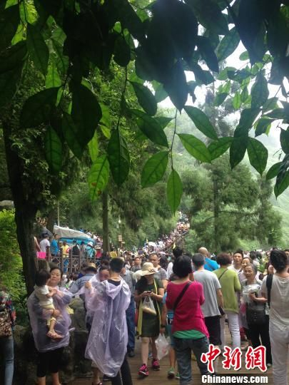 """图为黄果树瀑布景区前往""""水帘洞""""的路上,游客已连成""""人龙""""。 杨茜 摄"""