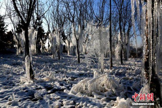 甘肃河西走廊的张掖市树林里的冰挂和地上的积雪构成一个冰雪世界。 陈礼 摄