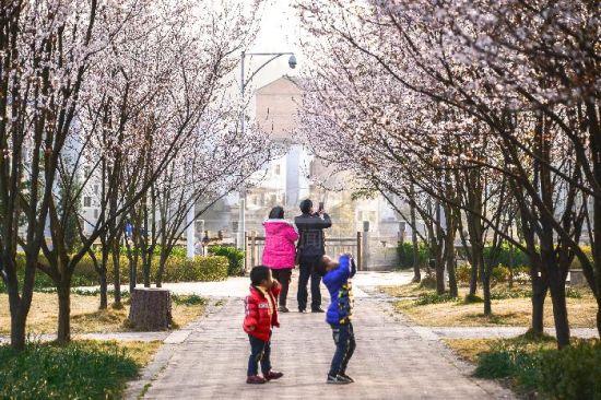,岑巩新兴县城各种花卉竞相盛放,成为一道亮丽的风景线,吸引市民赏花拍照。