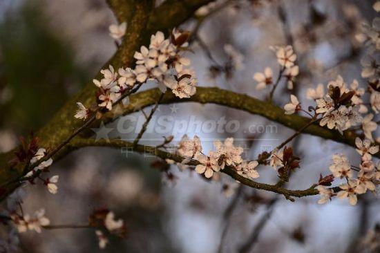 岑巩新兴县城各种花卉竞相盛放,成为一道亮丽的风景线,吸引市民赏花拍照。