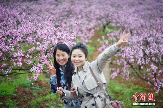 3月11日,两名游客在桃园合影。当日,贵州省余庆县龙溪镇举办第四届桃花节,盛开的万亩桃花吸引大量游人前来踏春赏花。 中新社记者 贺俊怡 摄