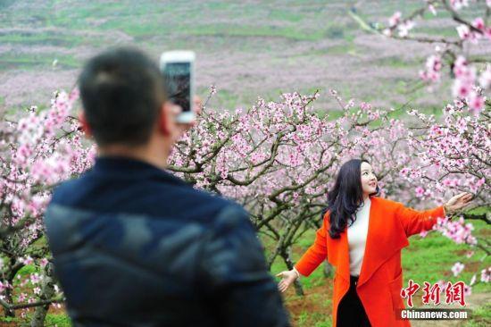 3月11日,游客在桃园里合影。当日,贵州省余庆县龙溪镇举办第四届桃花节,盛开的万亩桃花吸引大量游人前来踏春赏花。 中新社记者 贺俊怡 摄