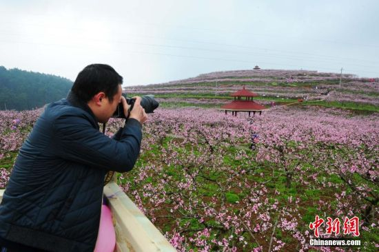 3月11日,一名摄影爱好者在桃园拍摄桃花。当日,贵州省余庆县龙溪镇举办第四届桃花节,盛开的万亩桃花吸引大量游人前来踏春赏花。 中新社记者 贺俊怡 摄