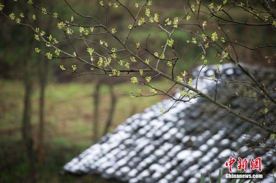 3月10日,贵州省余庆县花山乡农舍上的积雪。当日10时,中央气象台继续发布寒潮蓝色预警。受寒潮影响,贵州省多地出现降雪天气,5县(市、区)在雷雨中夹降小冰雹;32县(市、区)出现降雪,6县(市、区)出现积雪,积雪最深厚度为8厘米。中新社记者 贺俊怡 摄