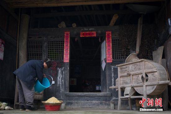 3月13日上午,老屋前,68岁的张金贵老人将浸泡饱满的黄豆滤干,准备制作一道属于自己独特的美味,为日常劳作补充所需的能量。 中新社记者 贺俊怡 摄
