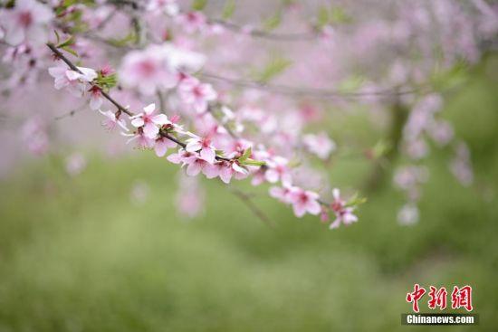 桃花园美景。 徐世钊 摄