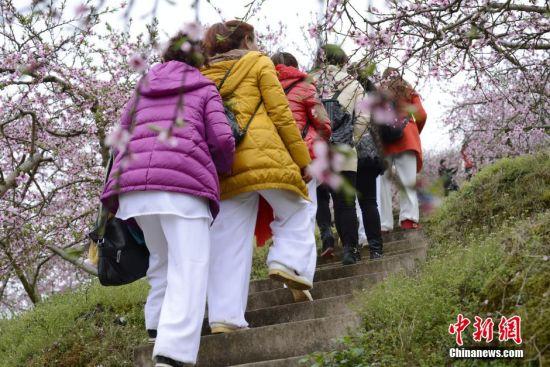 踏青赏花的游客。 徐世钊 摄