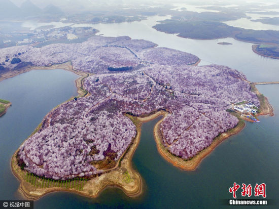 溪河入湖口过去隶属贵州平坝农场,现在划归贵安新区,岛屿连接花树连接,形成花海奇观。 图片来源:视觉中国