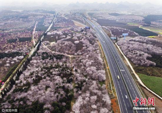 红枫湖中段的沪昆高速公路贵阳至安顺段从花海中穿越而过。 图片来源:视觉中国