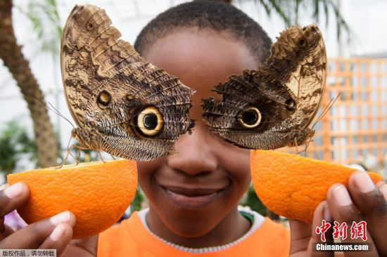 当地时间3月23日,英国伦敦自然历史博物馆举办奇异蝴蝶展(Sensational Butterflies),儿童与蝴蝶亲密接触。