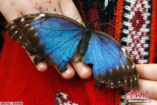 英国博物馆举办奇异蝴蝶展 儿童与蝴蝶亲密接触