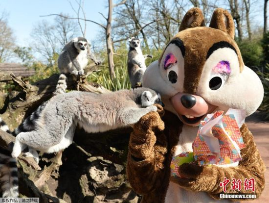 当地时间2016年3月27日,法国拉弗莱什,动物园的动物们收到复活节礼物包裹急忙拆开表情萌萌哒。