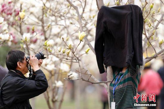 """3月31日,摄影爱好者在""""自制背景""""前拍摄玉兰花。今年,北京国际雕塑公园举办""""玉兰茶会"""",在继承中国优秀传统文化的基础上,巧妙融合时尚气息,将琴棋、书画、礼乐、茶席、戏曲、养生、服饰、诗会等多个类别汇聚,给北京国际雕塑公园玉兰文化节增添了几番古典与优雅的韵味。北京国际雕塑公园""""玉兰花苑""""占地5公顷,种植着8个品种5000余株玉兰,是北京规模最大的玉兰观赏园。中新社记者 盛佳鹏 摄"""