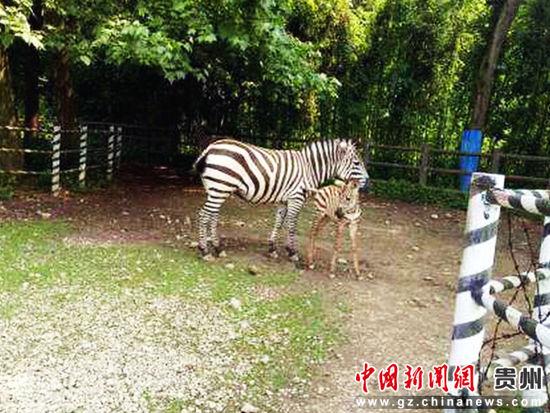 """贵州森林野生动物园饲养的""""动物萌宠"""".王淑林摄图片"""