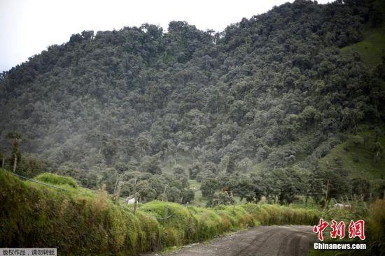 火山灰铺天盖地,绿植也变成了灰蒙蒙的一片。