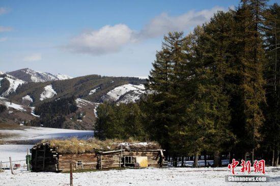 """9月24日到25日,沿天山一带受冷空气影响出现降雪,温度降到零摄氏度以下。这是2016年入秋以来,地处新疆东大门的哈密降下的第一场雪。深秋九月,挺拔的松树正值金黄与翠绿相互映衬,渲染着天山秋意渐浓。突来的大雪添加了松林的色彩,绚丽多彩的天山更让游人感受""""十里不同天""""的神秘。图为雪后的牧人房屋。 曹新加 摄"""