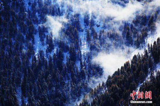 """9月24日到25日,沿天山一带受冷空气影响出现降雪,温度降到零摄氏度以下。这是2016年入秋以来,地处新疆东大门的哈密降下的第一场雪。深秋九月,挺拔的松树正值金黄与翠绿相互映衬,渲染着天山秋意渐浓。突来的大雪添加了松林的色彩,绚丽多彩的天山更让游人感受""""十里不同天""""的神秘。图为东天山上森林中的玉露生寒。 曹新加 摄"""