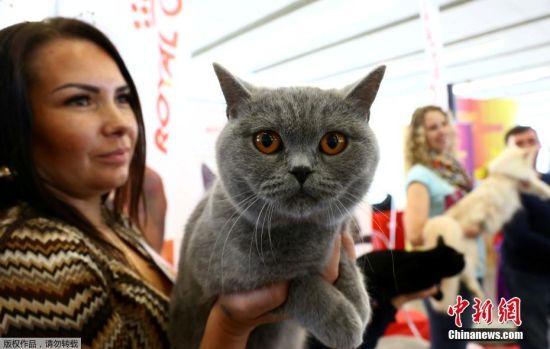 当地时间10月8日,国际猫展在白俄罗斯明斯克举行,各种喵星人纷纷亮相比美。