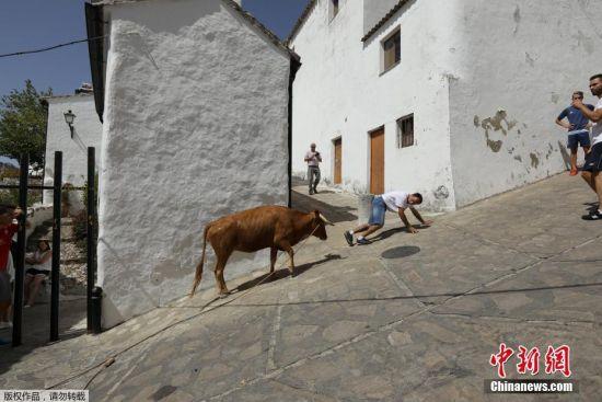白色村庄内,一头小母牛追逐一名狂欢者。