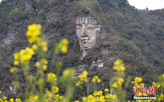 2月13日,透过油菜花田拍摄的佛像。这座由天然巨石雕凿形成的佛像坐落在贵阳市白云区下水村,佛像身高约50米,头高16米,坐东向西,佛身则是依山就势的一块块石岩石板叠成。中新社记者 贺俊怡 摄