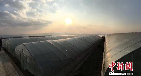 恒大集团帮扶贵州省大方县易地搬迁贫困户发展蔬菜大棚种植。 杨云 摄