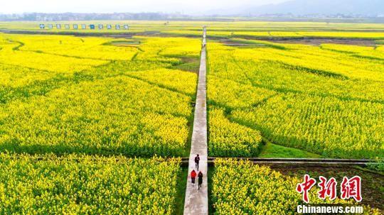 图为游客在秀山清溪油菜花地游玩。 陈碧生 摄